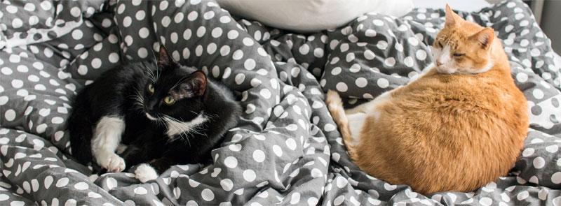 zdrowa dieta kota -  zdrowa karma dla kota - jak odchudzić kota?  agu blog